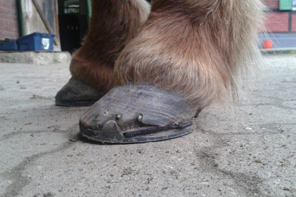Braucht Ihr Pferd Hufeisen?